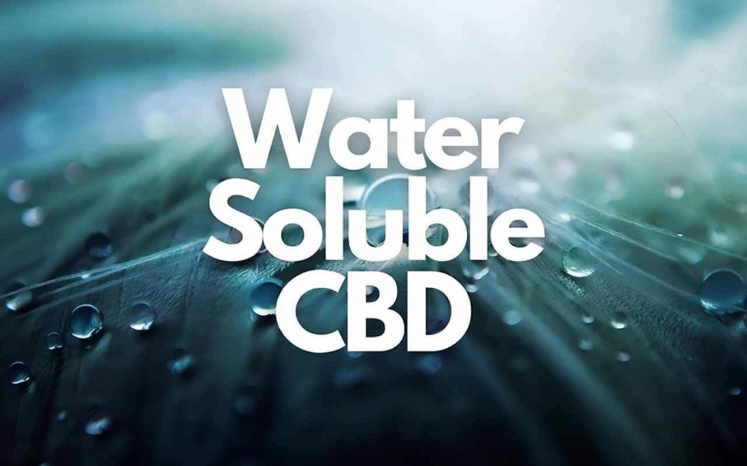 Water Soluble CBD: How Does It Affect Bioavailability?